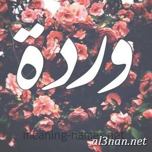 صور-اسم-وردة-خلفيات-اسم-وردة-،-رمزيات-اسم-وردة_00725 صور اسم وردة، خلفيات اسم وردة، رمزيات اسم وردة