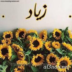 صور-اسم-زياد،-خلفيات-اسم-زياد-رمزيات-اسم-زياد_00131 صور اسم زياد ،خلفيات اسم زياد ،رمزيات اسم زياد