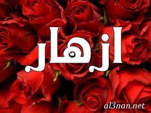 صوراسم-ازهار،-خلفيات-اسم-ازهار،-رمزيات-اسم-ازهار_00046-1-300x225 صور اسم أزهار 2020,خلفيات اسم أزهار ,رمزيات اسم أزهار