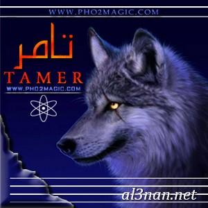 صور-اسم-تامر،-خلفيات-اسم-تامر-،-رمزيات-اسم-تامر_00092 صور اسم  تامر 2020,خلفيات اسم تامر ,رمزيات اسم  تامر